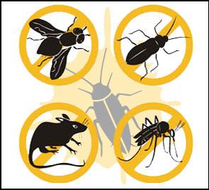 Disinfestazioni: topi, scarafaggi, zanzare