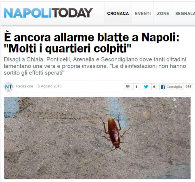 """È ancora allarme blatte a Napoli: """"Molti i quartieri colpiti"""""""